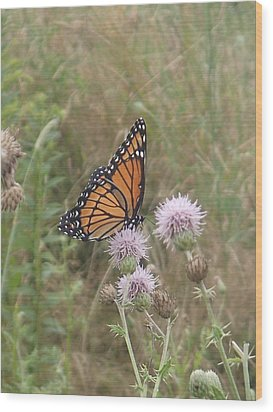 Wood Print featuring the photograph Viceroy On Thistle by Robert Nickologianis