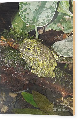 Vietnamese Mossy Frog Wood Print by Sara  Raber