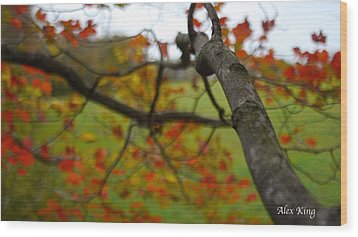 Wood Print featuring the photograph View From A Tree by Alex King