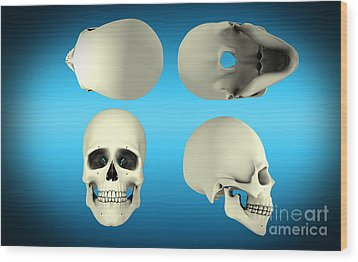 View Of Human Skull From Different Wood Print by Stocktrek Images