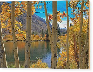 View Through The Aspens Wood Print