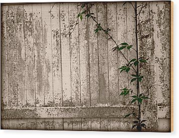 Wood Print featuring the photograph Vine And Fence by Amanda Vouglas