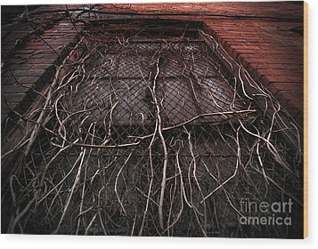 Vine Of Decay 1 Wood Print by Amy Cicconi