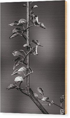 Vine On Iron Wood Print by Bob Orsillo