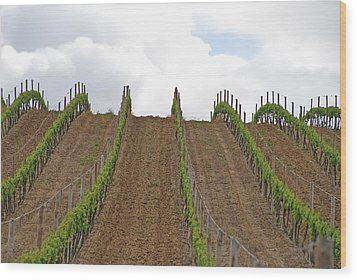 Vines Flow Over The Landscape Wood Print