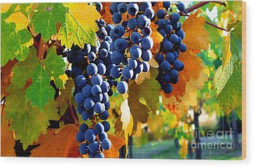 Vineyard 2 Wood Print by Xueling Zou