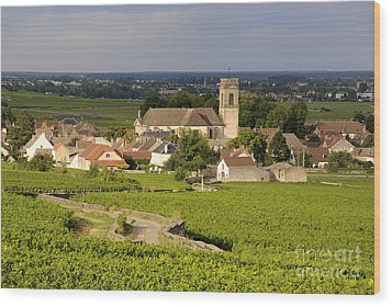 Vineyard And Village Of Pommard. Cote D'or. Route Des Grands Crus. Burgundy. France. Europe Wood Print by Bernard Jaubert