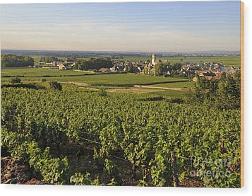 Vineyard And Village Of Pommard. Cote D'or. Route Des Grands Crus. Burgundy.france. Europe Wood Print by Bernard Jaubert