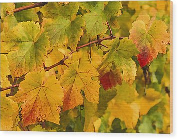 Vineyard Art Wood Print by Jean Noren