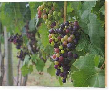 Wood Print featuring the photograph Vineyard Colors by Greg Graham