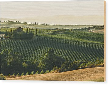 Vineyard From Above Wood Print by Clint Brewer
