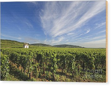 Vineyard Hut. Vineyard. Cote De Beaune. Burgundy. France. Europe Wood Print by Bernard Jaubert
