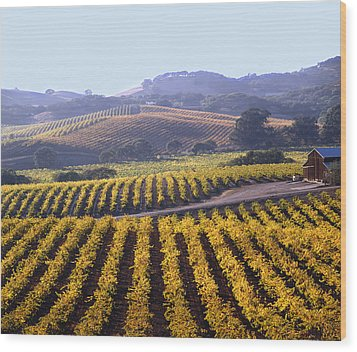 6b6386-vineyard In Autumn Wood Print