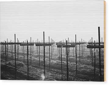 Vineyard In Fog Wood Print
