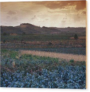 Vineyard In Krushevac. Serbia Wood Print by Juan Carlos Ferro Duque