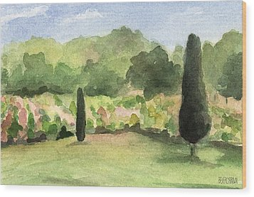 Vineyard In Provence Watercolor Paintings Of France Wood Print by Beverly Brown Prints