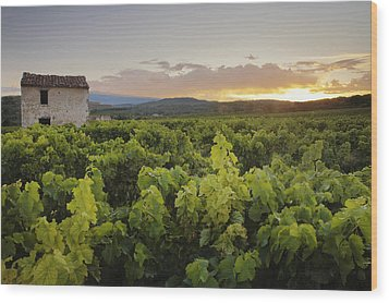Vineyard Near Malemort-du-comtat Wood Print by Andy Kerry
