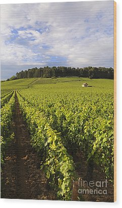 Vineyard Near Monthelie. Burgundy. France. Europe Wood Print by Bernard Jaubert