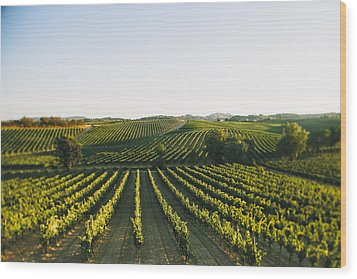 Vineyard Patchwork Wood Print by Clint Brewer