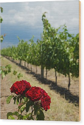 Vineyard Rose Wood Print