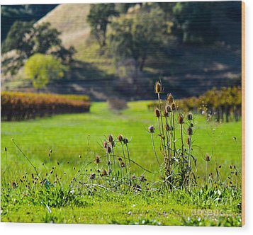 Vineyard Thistles Wood Print by CML Brown
