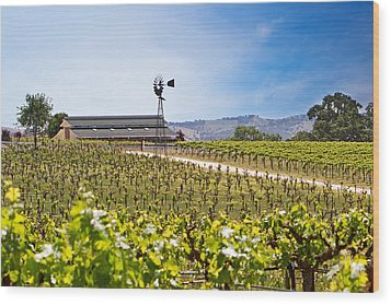 Vineyard With Young Vines Wood Print by Susan Schmitz