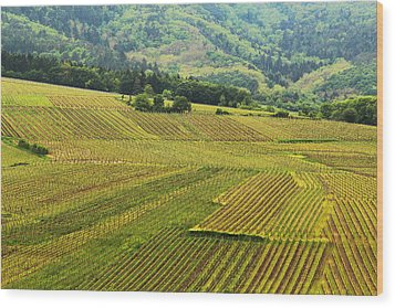 Vineyards Below Zellenberg France 1 Wood Print by Greg Matchick