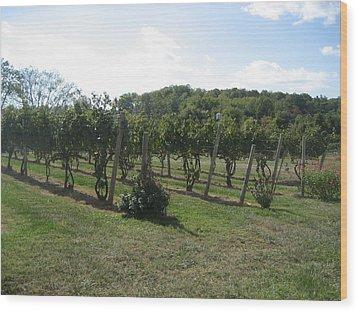 Vineyards In Va - 121251 Wood Print by DC Photographer