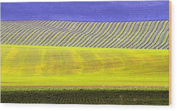 Vineyards Wood Print by Rebecca Cozart