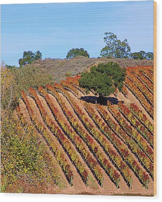 Vineyards Wood Print