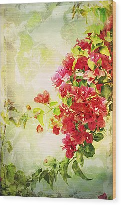 Vintage Bougainvillea San Diego California Wood Print by Marianne Campolongo