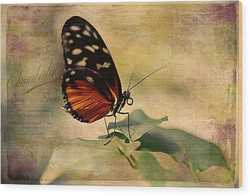 Vintage Butterfly Card Wood Print by Maria Angelica Maira