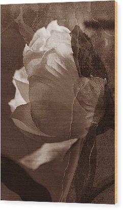 Vintage Camelia Wood Print
