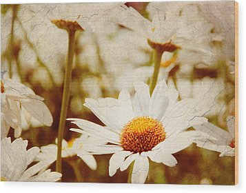 Vintage Daisy Wood Print by Beverly Stapleton
