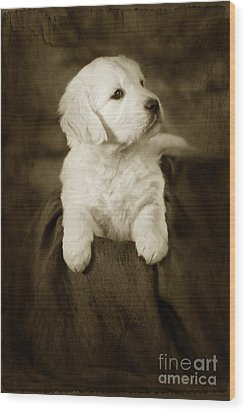 Vintage Golden Retriever Pup Wood Print by Angel  Tarantella