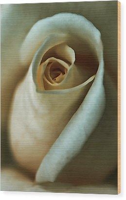 Vintage Macro Rose Flower Wood Print by Jennie Marie Schell