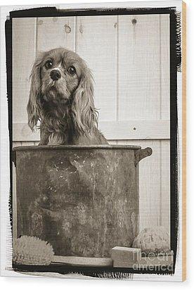 Vintage Puppy Bath Wood Print by Edward Fielding