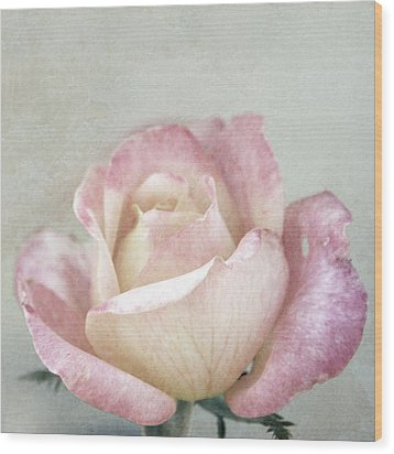 Vintage Rose In Pink And Robin's Egg Blue Wood Print by Brooke T Ryan