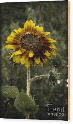 Vintage Rustic Sunflower Wood Print