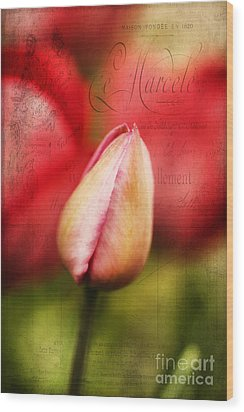 Vintage Tulip Wood Print by Darren Fisher