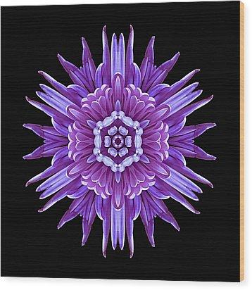 Violet Chrysanthemum Iv Flower Mandala Wood Print by David J Bookbinder