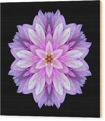 Violet Dahlia I Flower Mandala Wood Print by David J Bookbinder