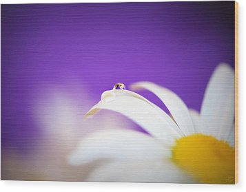Violet Daisy Dreams Wood Print