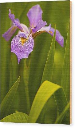 Violet Iris Wood Print by Phyllis Peterson