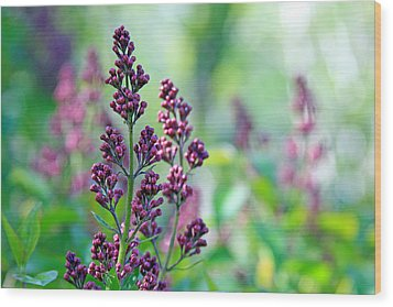 Violet Lilacs Budding Wood Print by Karon Melillo DeVega