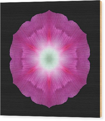 Violet Morning Glory Flower Mandala Wood Print by David J Bookbinder
