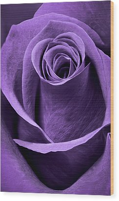 Violet Rose Wood Print by Adam Romanowicz