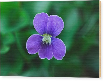 Wood Print featuring the photograph Violet Splendor by Julie Andel