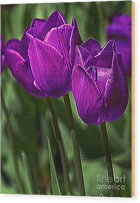 Violet Tulips 2 Wood Print by Susan Crossman Buscho