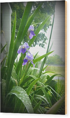 Wood Print featuring the photograph Iris With Dew by Laurie Perry